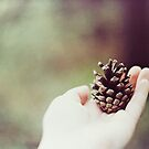 Pine Cone by Indea Vanmerlin