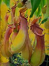 Hanging Pitcher Plant in Vintage Colors by MotherNature