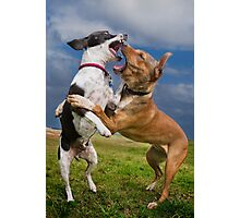 Dogs with game face on .14 Photographic Print