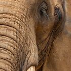 Elephant by Svetlana Sewell
