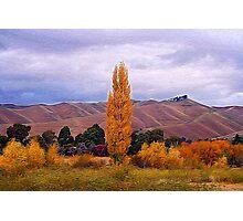 Marlborough, Wither Hills Photographic Print