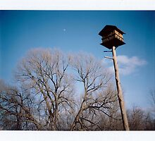 Birdhouse by bradydhebert