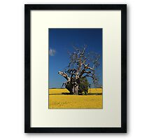 Old Reds in Yellow Framed Print