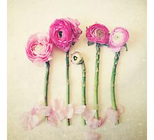 Asparagus and Pink Flowers Photographic Print