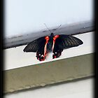 Butterfly in Red by SamanthaJulain