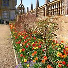Tulip Border at Montecute House by lezvee