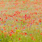 Wildflower Field by Stephen Knowles