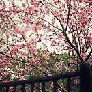 Spring Garden by Kameron Walsh