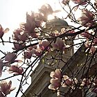 Blossoms & Brick by CGreene85