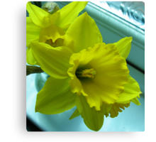 Daffodils Rejoicing Canvas Print