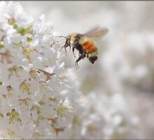The Buzz In The Garden by Crista Peacey