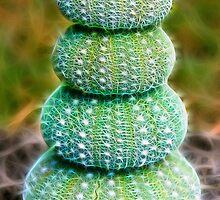 Sea Urchins by Heike Richter