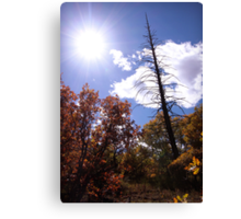 picture book fall III - Dead Tree Canvas Print