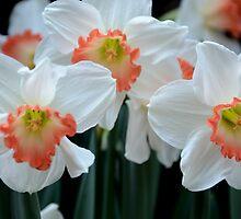 Spring Jonquils by Kathleen Struckle