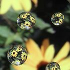 Drops of daisy [iPhone-iPod case] by Susan Littlefield