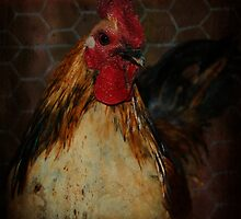 Portrait of Rooster by Ginger  Barritt