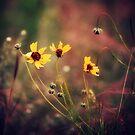 Secret Garden [II] by FaireUnVoeu