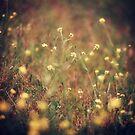 Secret Garden [III] by FaireUnVoeu