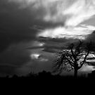 My favourite tree by XplosivBadger-