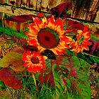 sunflower by DMEIERS
