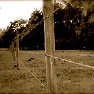 Riding Fences by MEParnell