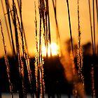 Lake Davidson Sunset by MEParnell