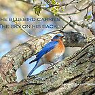 Bluebird Greeting Card by Susan S. Kline