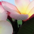 Frangipani Dew 2 by Elisabeth Thorn