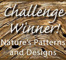 NPAD Challenge Winner Banner by Celeste Mookherjee