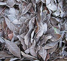 Frosty Leaves by diveroptic