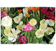 Open Tulips Poster