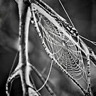 Spider Web by Jim Semonik