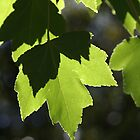 Leaves - Light - Dancing by Joy Watson