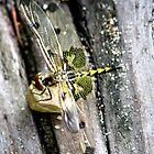 Dragonfly Hearts by pratt1ak
