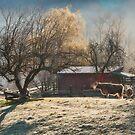 Morning Farmyard 1  by Tracy Riddell