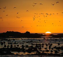 Sunset at Dyer Island by Anna Phillips