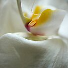 I LOVE ORCHIDS by laureen warrington