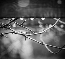 love the rain by James Calvey