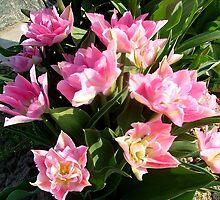 Pink tulips by Ana Belaj