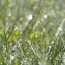 Rain Drops, Grass and Bokeh! by Linda Makiej