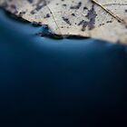 A Leaf and Blue  by bcboscia410