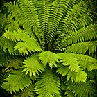 Large Green Fern by mlphoto