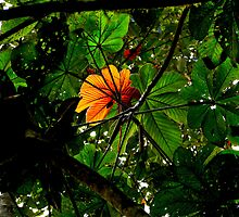 Jungle Canopy in Mindo by Al Bourassa