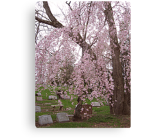 Cherry Blossoms Weep Over My Sister's Grave Canvas Print
