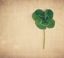 four leaf clover 2 by Catherine  Regan