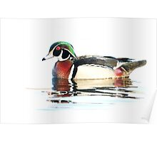 Watercolour Wood Duck Poster