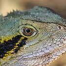 Eastern Water Dragon II by NickVerburgt