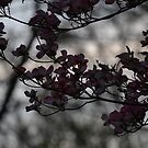 Dogwood Tree by JMG1883