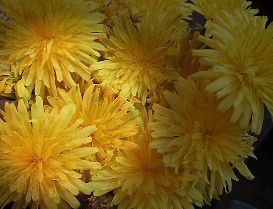 Dandy Dandelions by Monnie Ryan