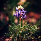 Bluebonnet by FaireUnVoeu